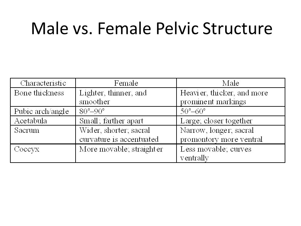 Male vs. Female Pelvic Structure