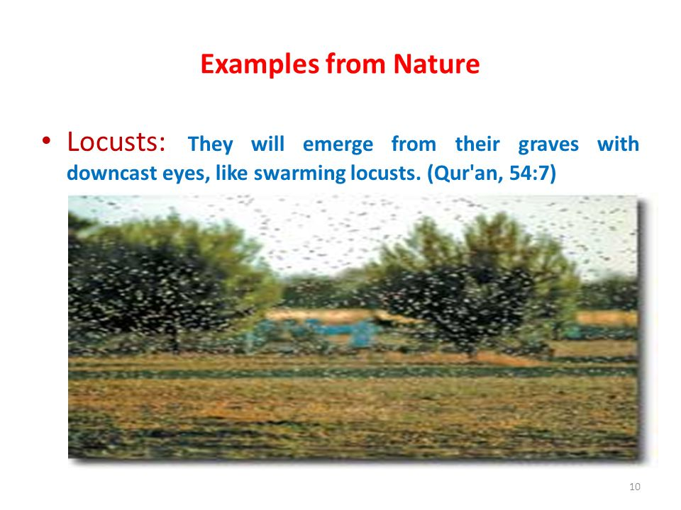 Examples from Nature Locusts: They will emerge from their graves with downcast eyes, like swarming locusts.