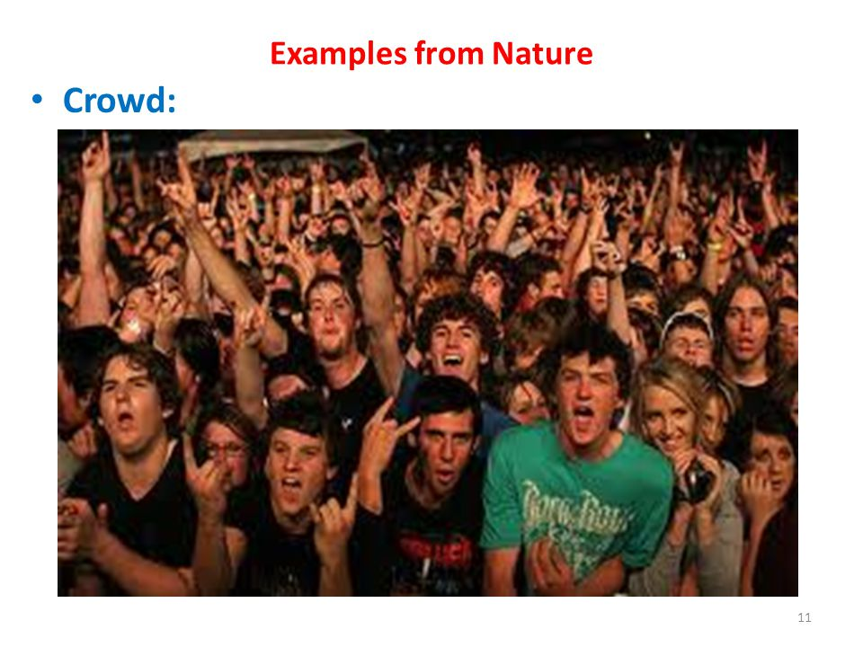 Examples from Nature Crowd: