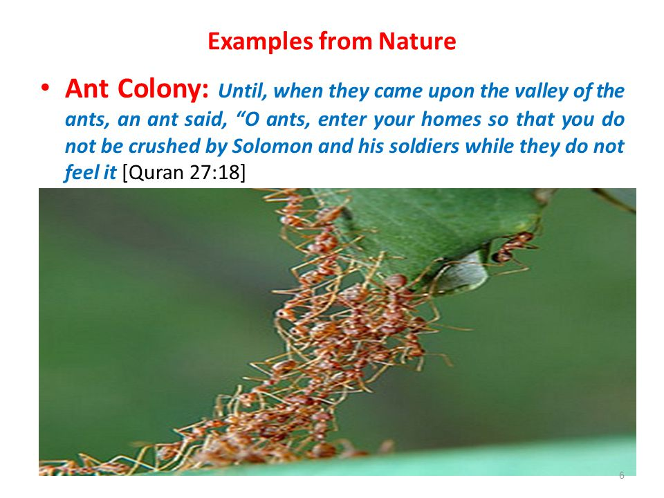 Examples from Nature