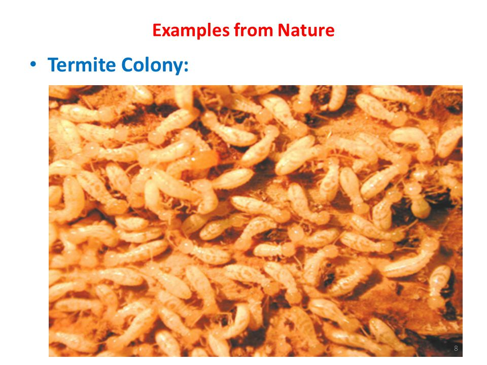Examples from Nature Termite Colony: