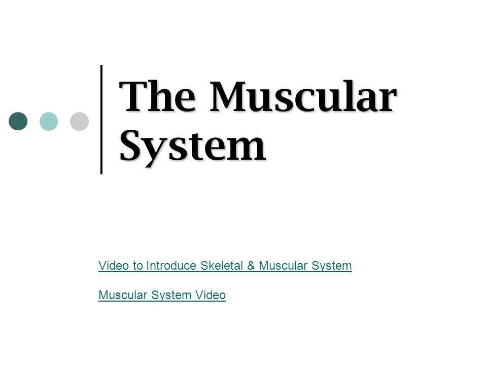The Muscular System Video to Introduce Skeletal & Muscular System