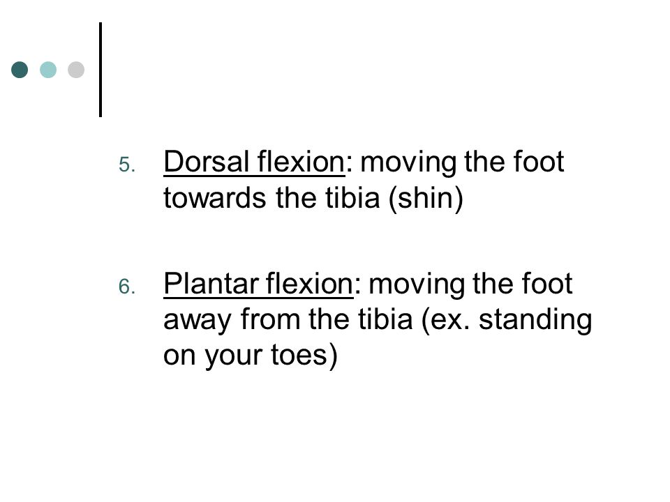 Dorsal flexion: moving the foot towards the tibia (shin)