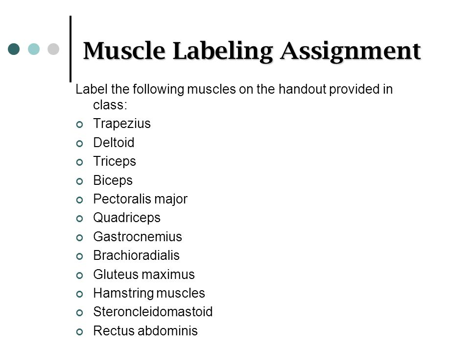 Muscle Labeling Assignment