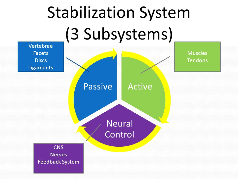 Stabilization System (3 Subsystems) Vertebrae Facets Discs Ligaments