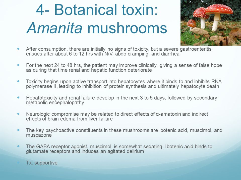 4- Botanical toxin: Amanita mushrooms