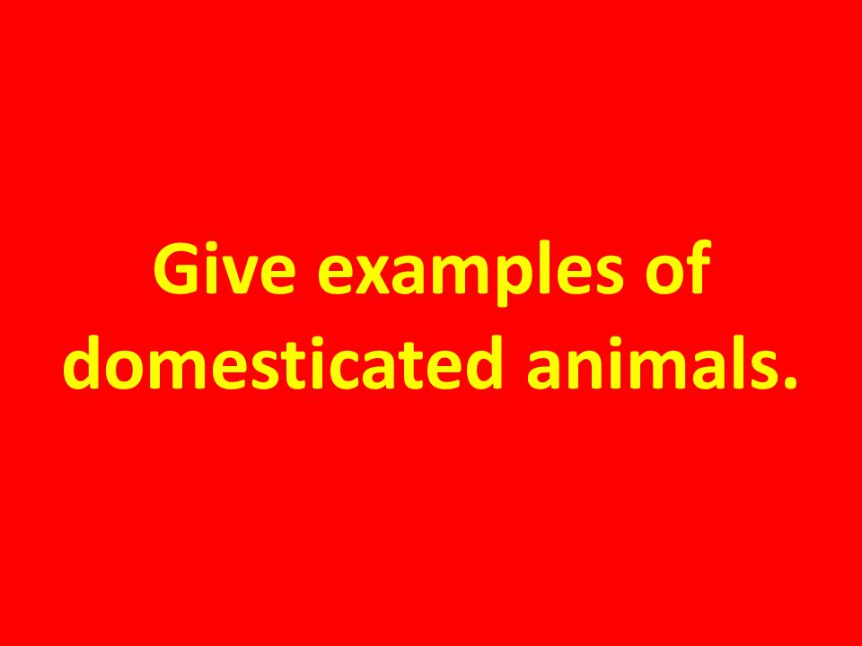 Give examples of domesticated animals.