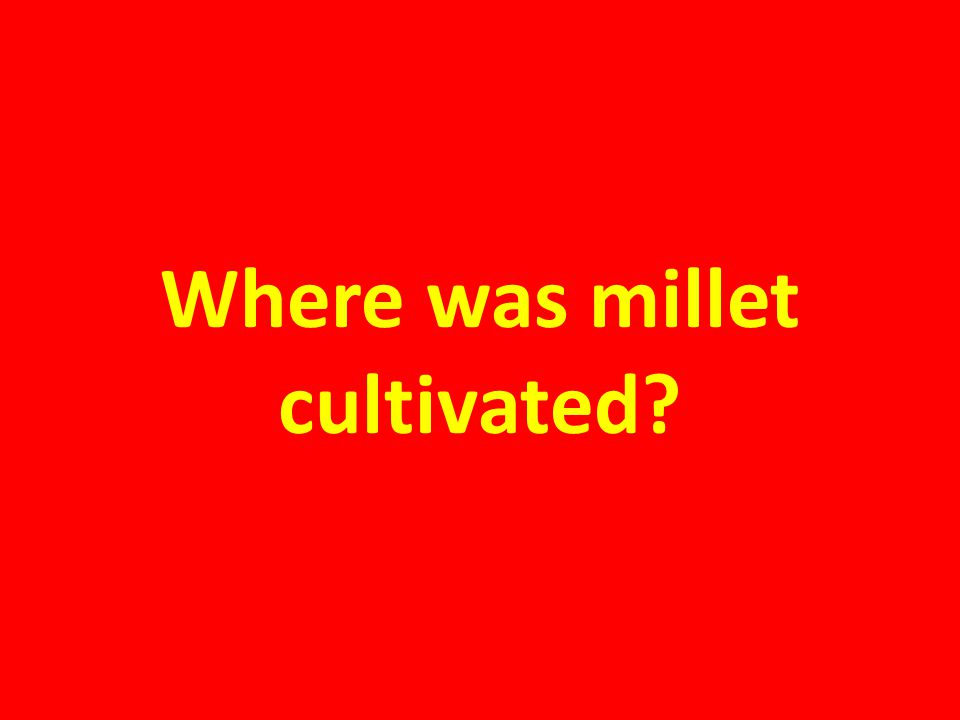 Where was millet cultivated