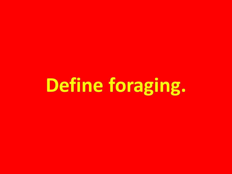 Define foraging.