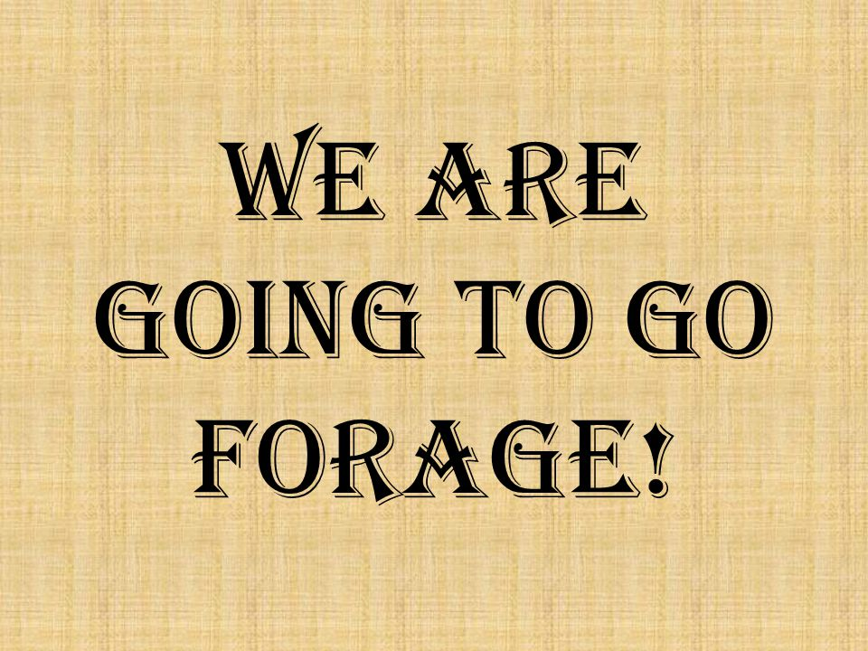 We are going to go FORAGE!