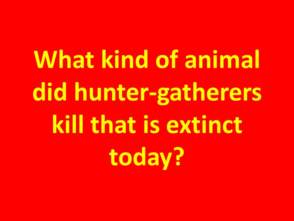 What kind of animal did hunter-gatherers kill that is extinct today