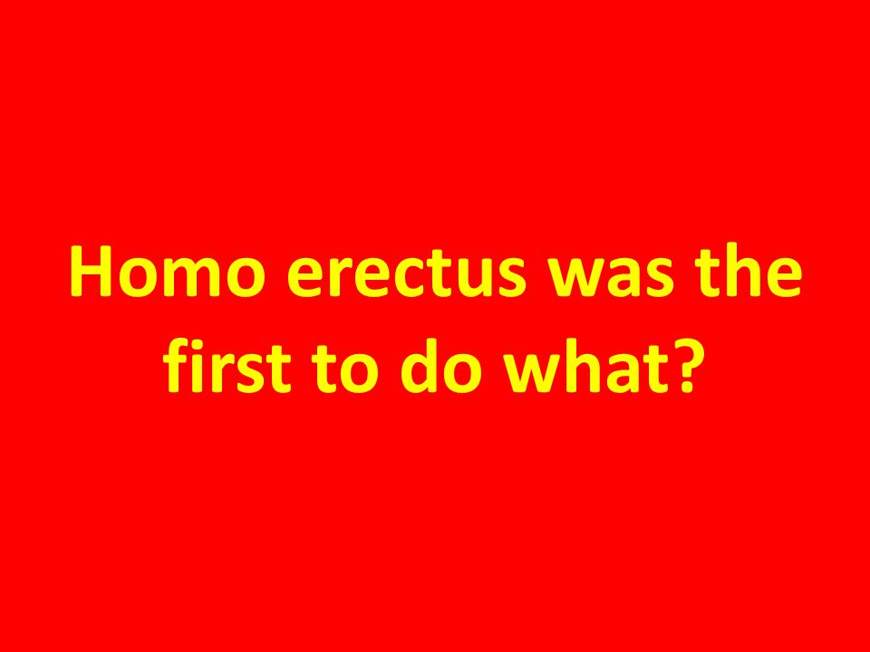 Homo erectus was the first to do what