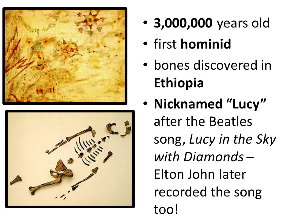 3,000,000 years old first hominid. bones discovered in Ethiopia.