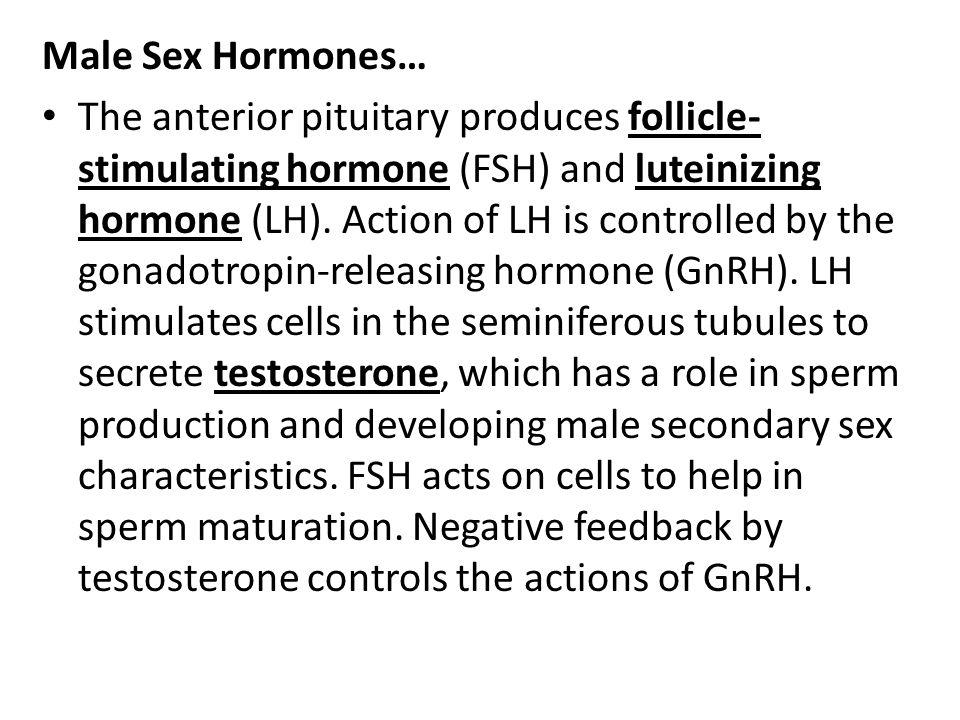 Male Sex Hormones…