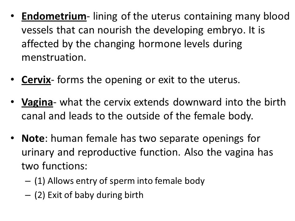 Cervix- forms the opening or exit to the uterus.