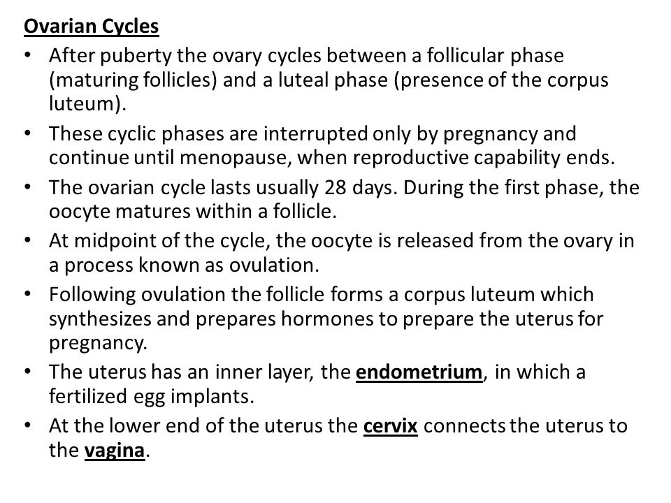 Ovarian Cycles After puberty the ovary cycles between a follicular phase (maturing follicles) and a luteal phase (presence of the corpus luteum).