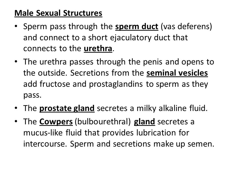 Male Sexual Structures