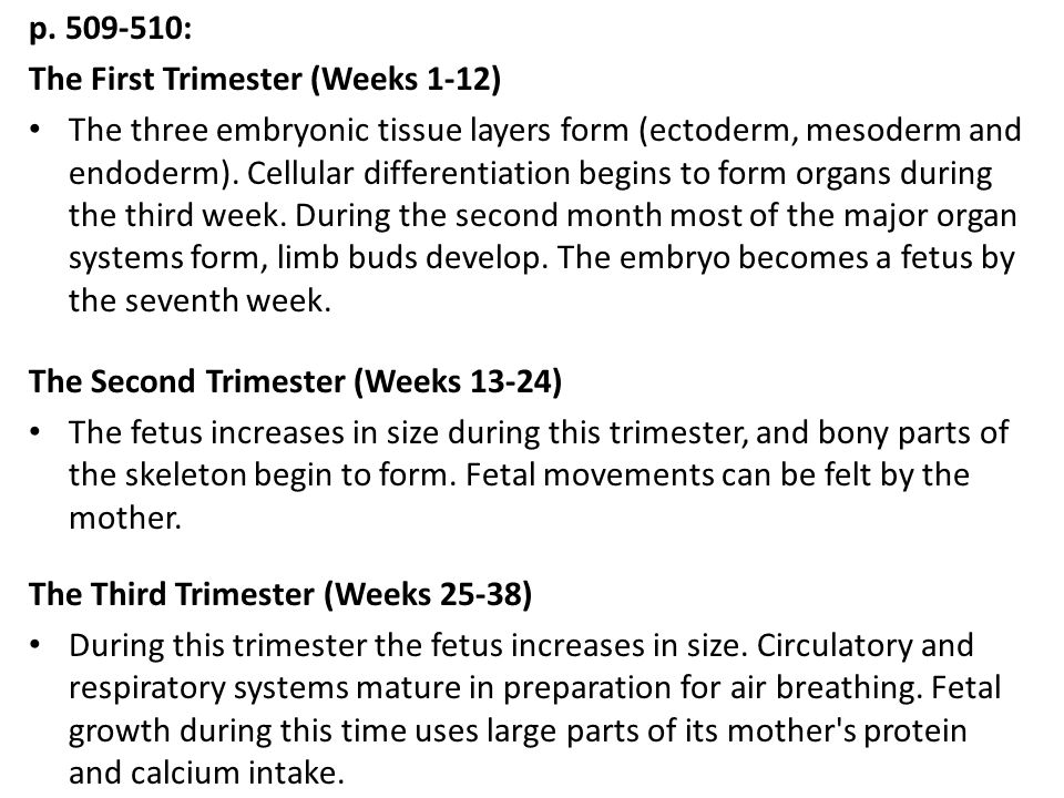 p. 509-510: The First Trimester (Weeks 1-12)