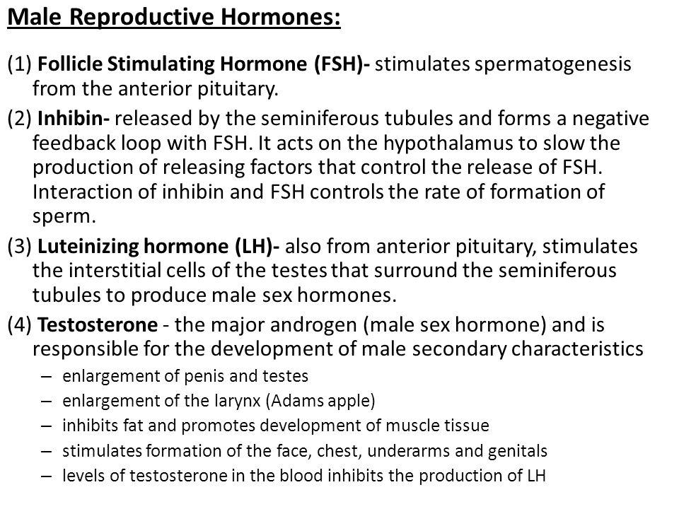 Male Reproductive Hormones: