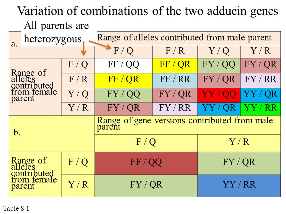 Variation of combinations of the two adducin genes