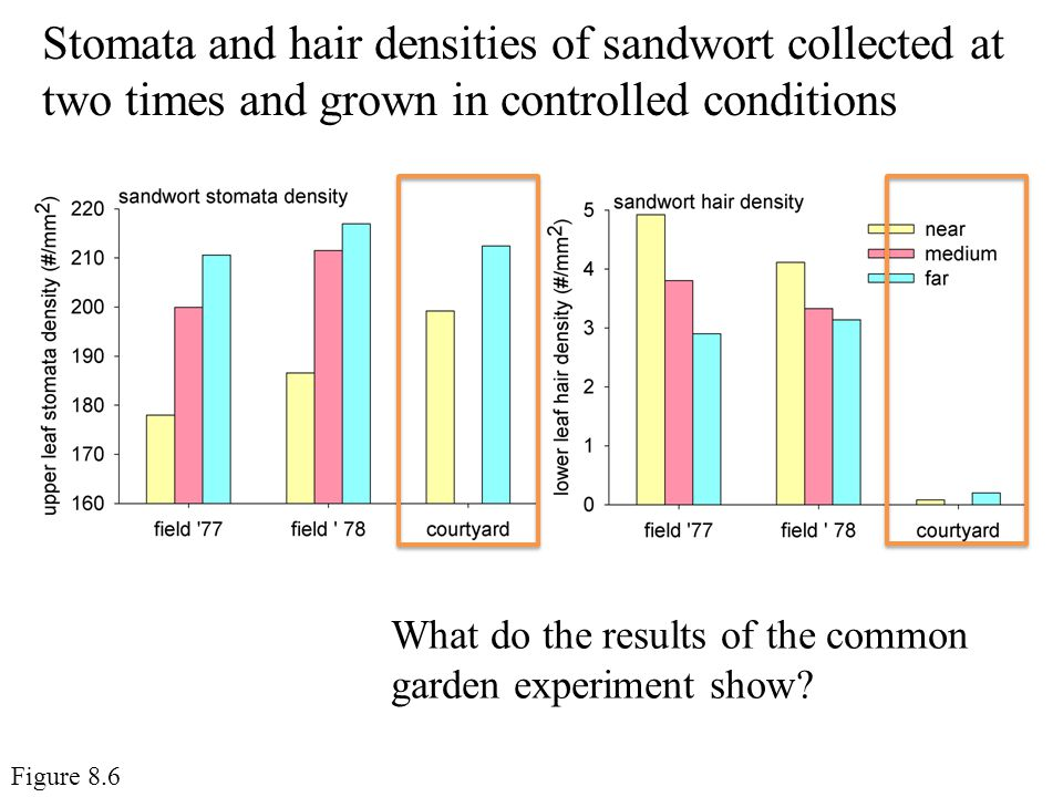 Stomata and hair densities of sandwort collected at two times and grown in controlled conditions