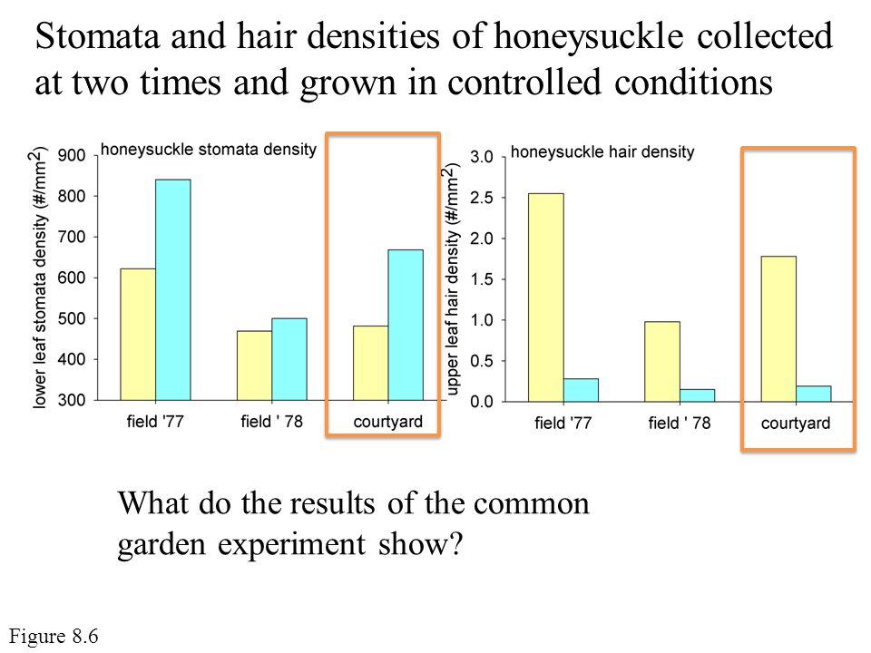 Stomata and hair densities of honeysuckle collected at two times and grown in controlled conditions