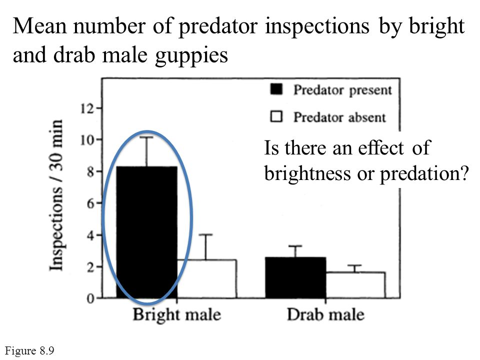 Mean number of predator inspections by bright and drab male guppies