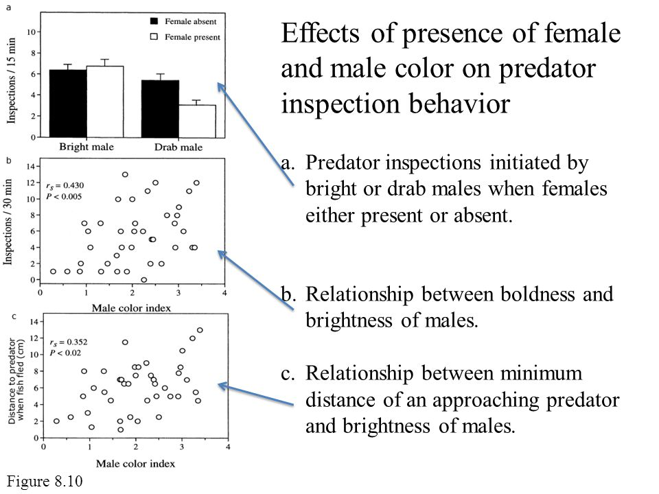 Effects of presence of female and male color on predator inspection behavior