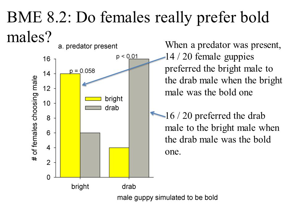 BME 8.2: Do females really prefer bold males