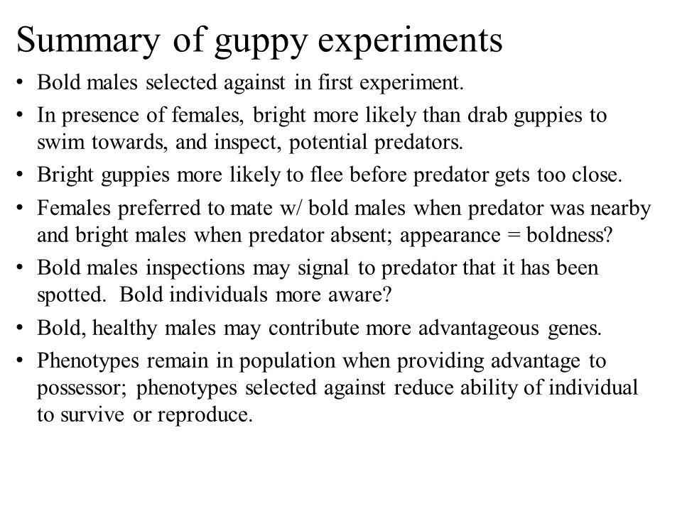 Summary of guppy experiments