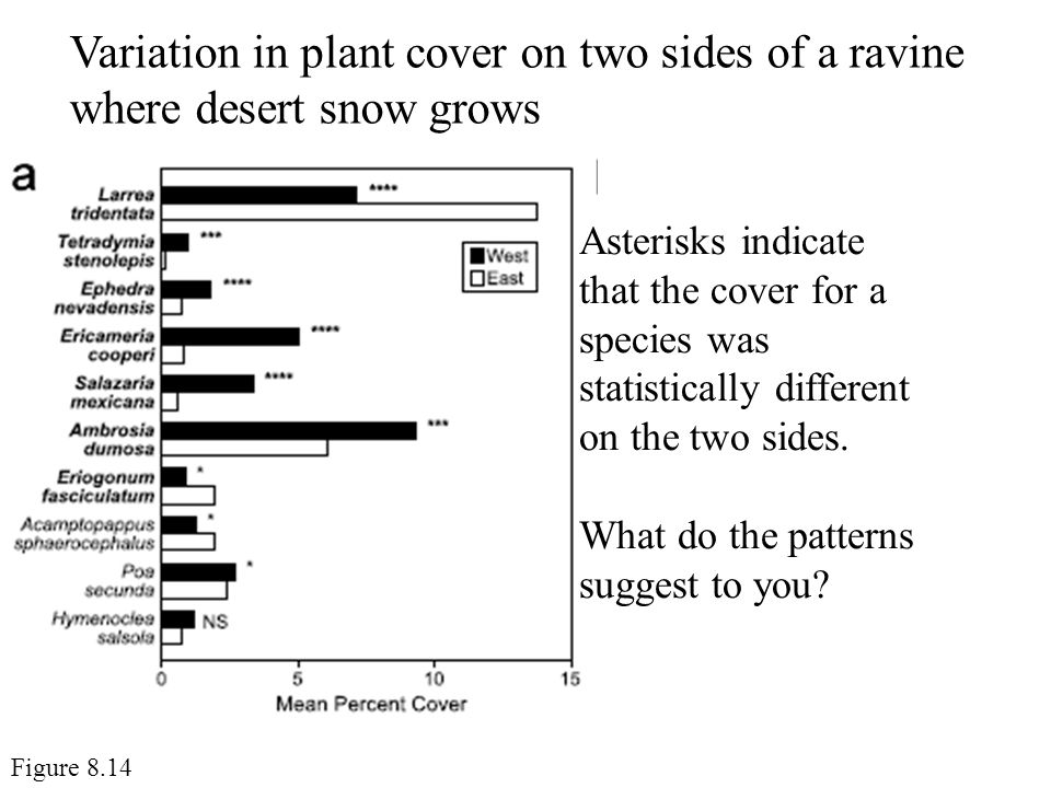 Variation in plant cover on two sides of a ravine where desert snow grows