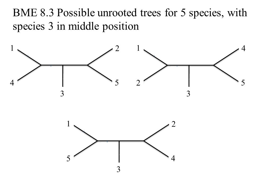 BME 8.3 Possible unrooted trees for 5 species, with species 3 in middle position