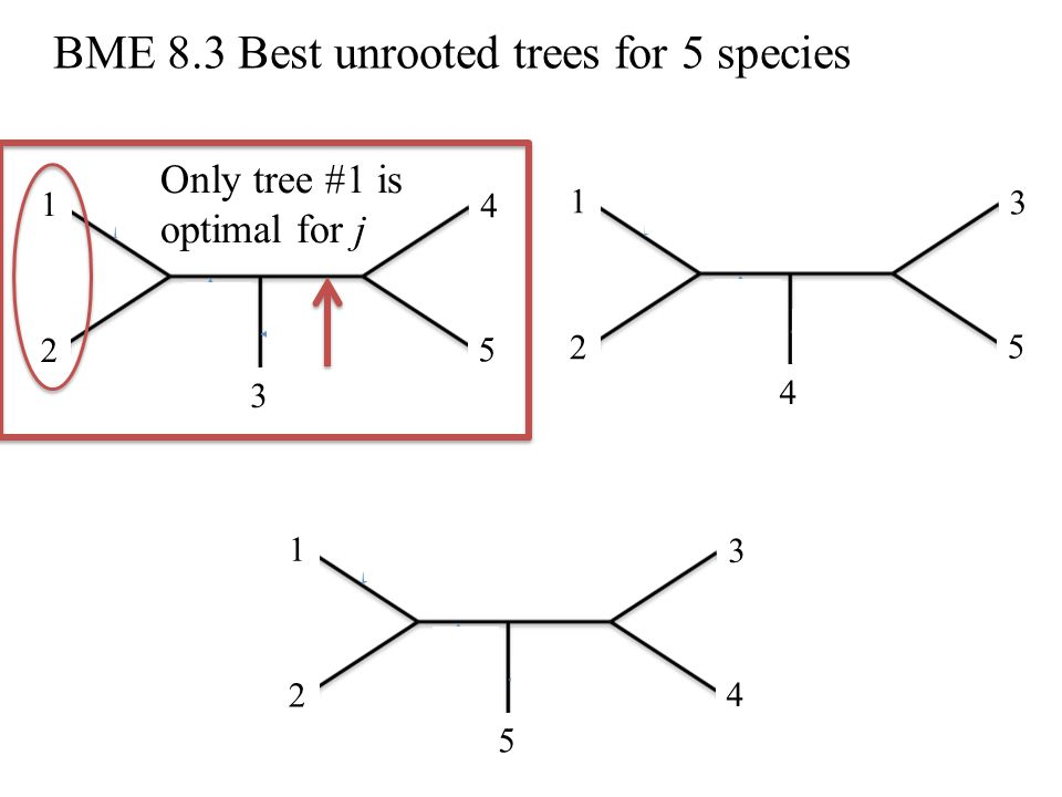 BME 8.3 Best unrooted trees for 5 species