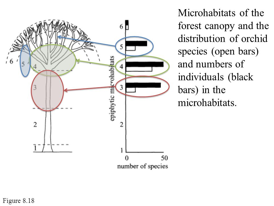 Microhabitats of the forest canopy and the distribution of orchid species (open bars) and numbers of individuals (black bars) in the microhabitats.