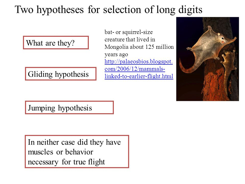 Two hypotheses for selection of long digits