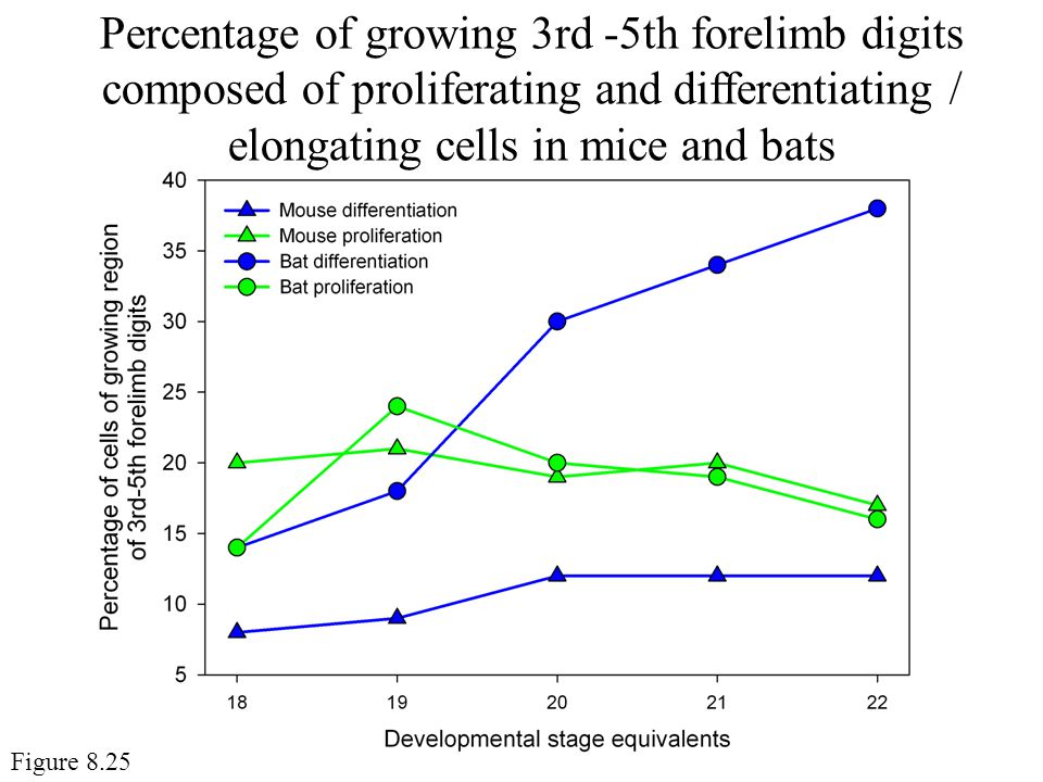 Percentage of growing 3rd -5th forelimb digits composed of proliferating and differentiating / elongating cells in mice and bats