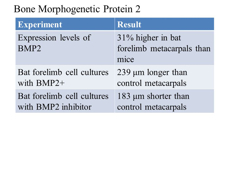 Bone Morphogenetic Protein 2