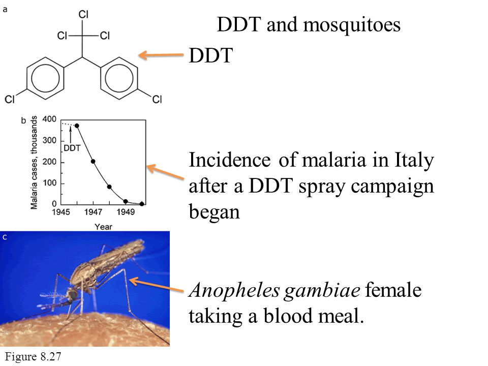 Incidence of malaria in Italy after a DDT spray campaign began