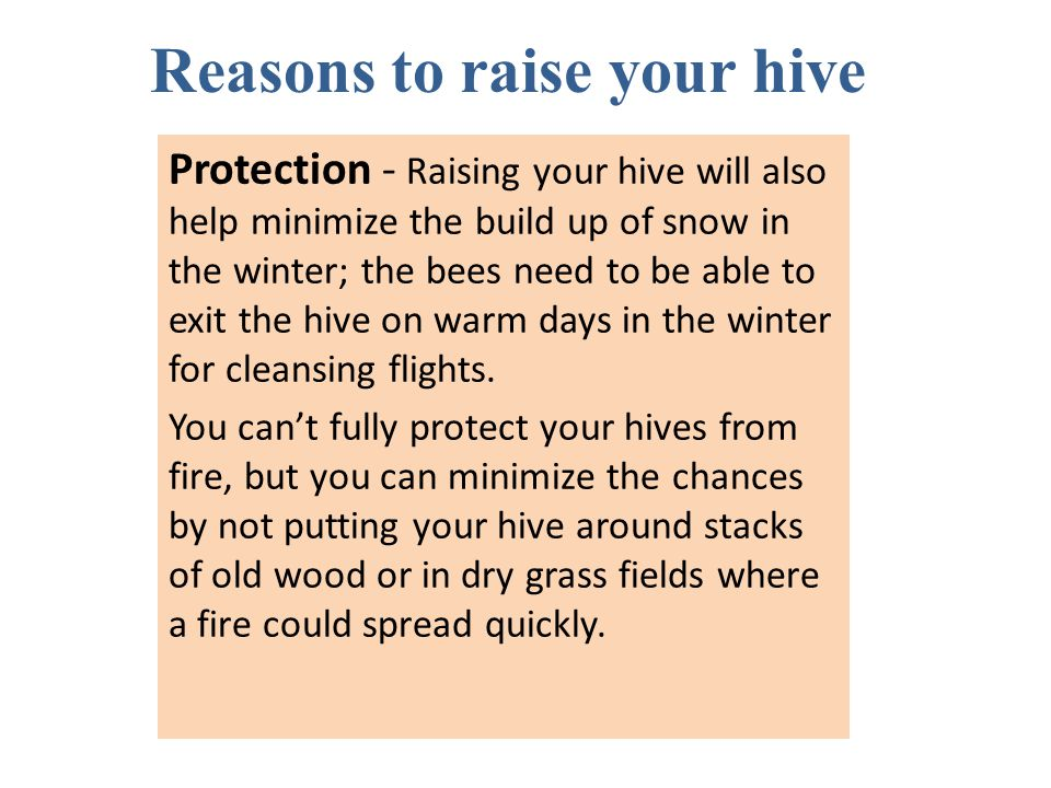 Reasons to raise your hive