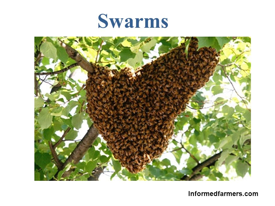 Swarms Informedfarmers.com