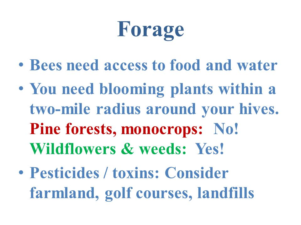 Forage Bees need access to food and water