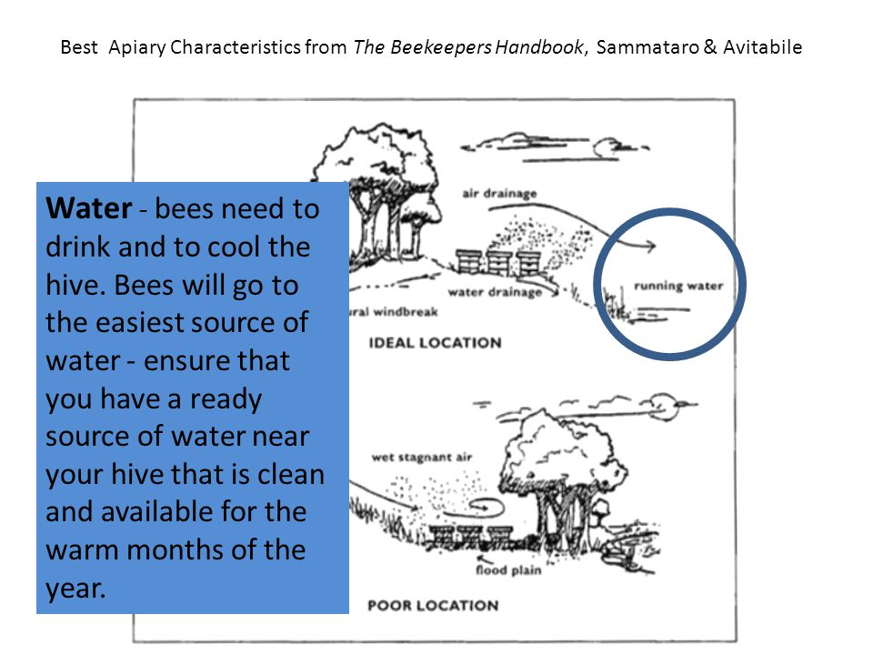 Best Apiary Characteristics from The Beekeepers Handbook, Sammataro & Avitabile