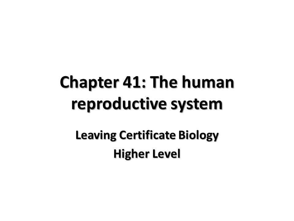 Chapter 41: The human reproductive system