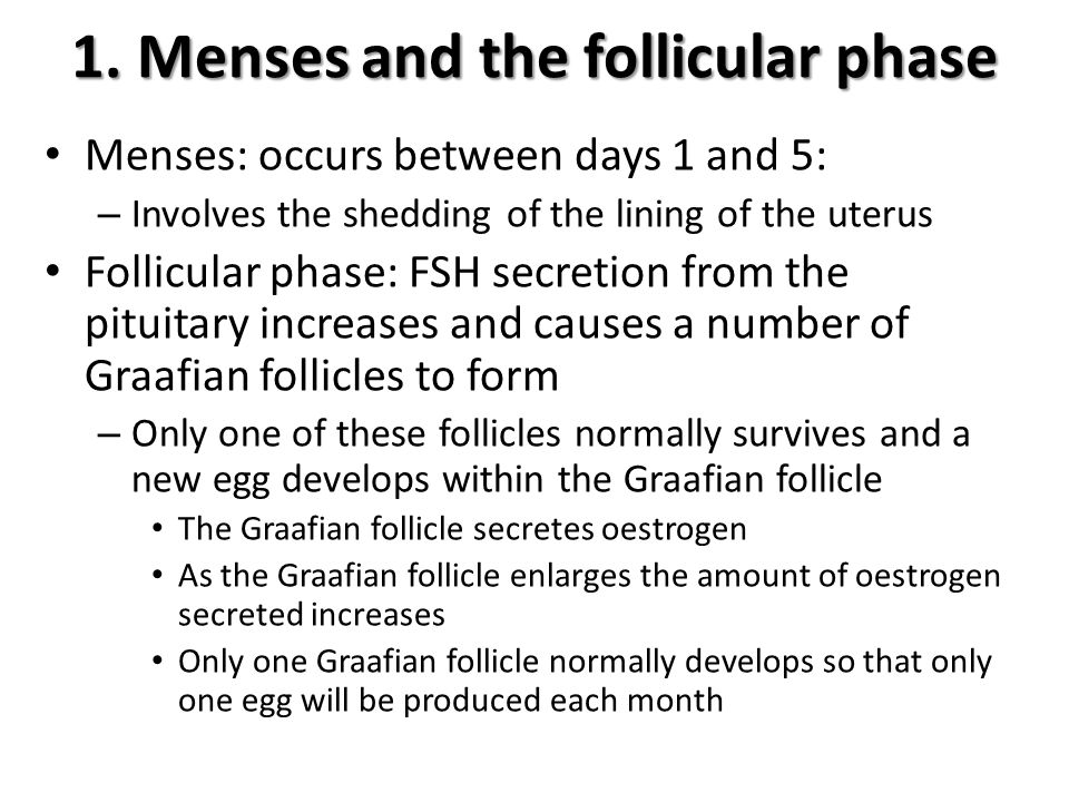 1. Menses and the follicular phase