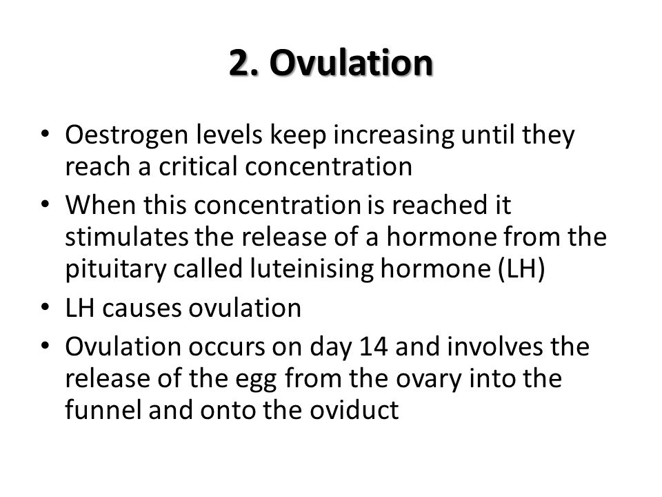 2. Ovulation Oestrogen levels keep increasing until they reach a critical concentration.