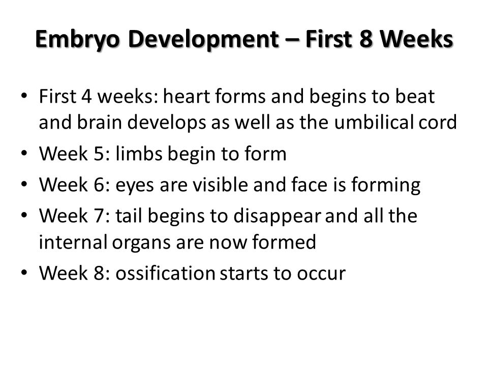 Embryo Development – First 8 Weeks