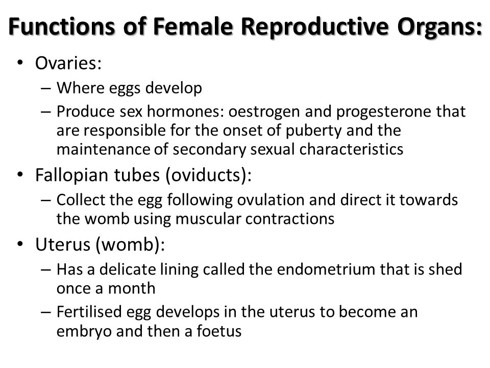 Functions of Female Reproductive Organs: