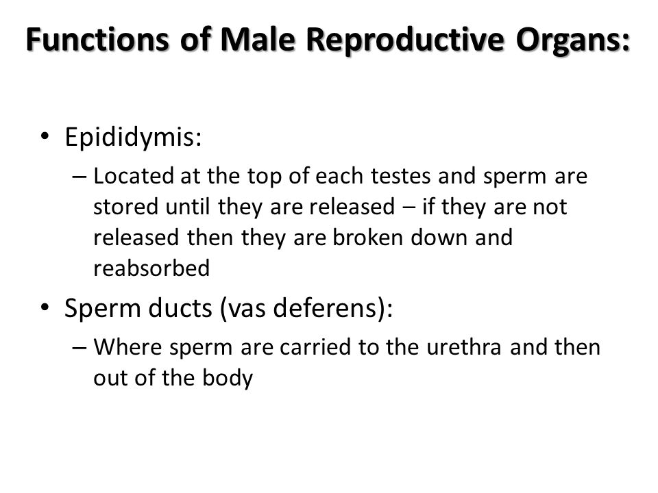 Functions of Male Reproductive Organs: