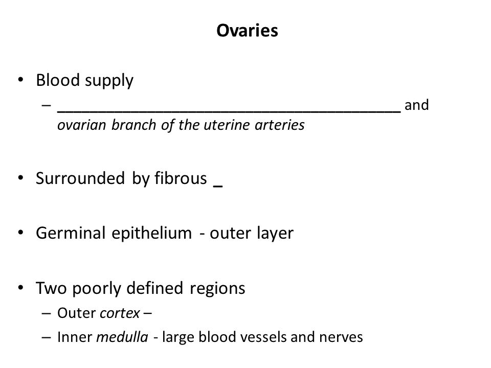 Ovaries Blood supply Surrounded by fibrous _