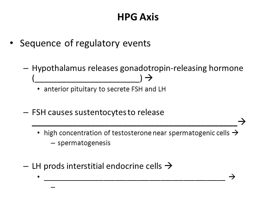 HPG Axis Sequence of regulatory events